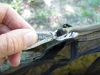 Tip Coupler For Bridge Hammock by GrizzlyAdams in Tips  and Tricks