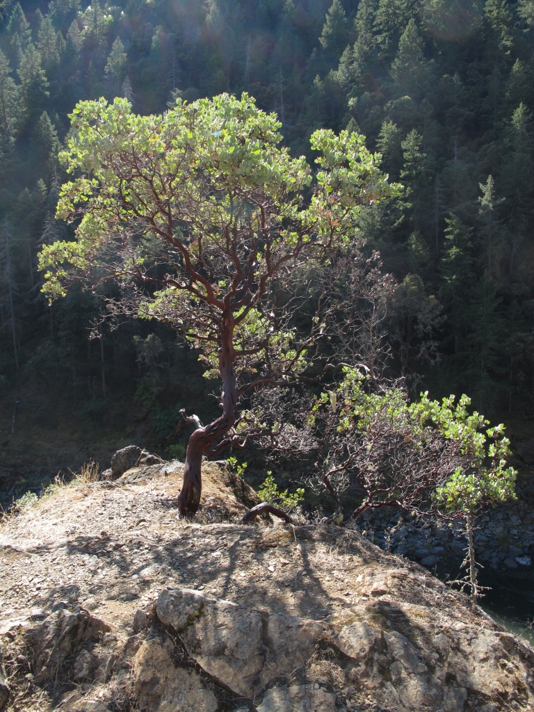 Hiking The Wild And Scenic Rogue River
