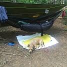Hammock setup with my dog Molly