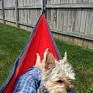 Pixie by IndyFace in Hammocks