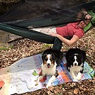 Hanging with the pups by Paul-Stefi in Hammocks