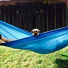 Hangin' with the pooch by Gordias in Hammocks