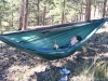 Warbonnet Blackbird by warbonnetguy in Hammocks
