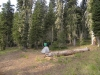Poker Flat Campground (2 Sites!) by hikingjer in Hammocks