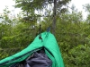 Hung To The Only Tree Near The Campsite, A Small Douglas-fir