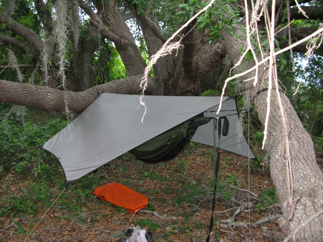 Hanging From One Tree