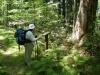 Uncut Forest