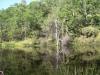 Frog Lake by bearbait in Hammock Landscapes