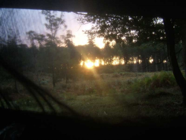 Sunrise through netting