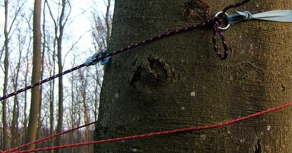 Tree width 02