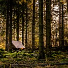 Sunrise in a swedish spruce forest by Biped in Hammock Landscapes