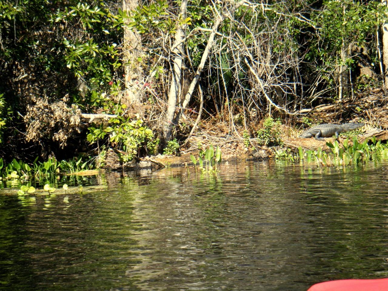 Florida Hang 2011