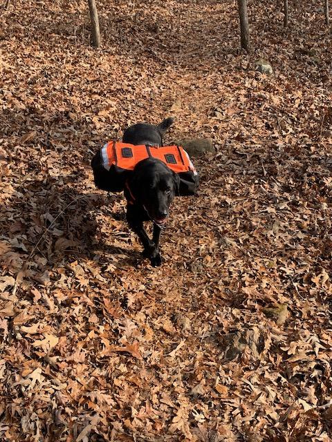 Indy & Dog Pack