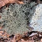 Weird Fungi