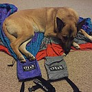 Dog approved by stadventures in Hammocks