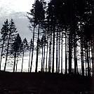 Hammock dreams by Mucho Gusto in Hammock Landscapes