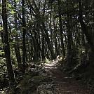 Greenstone Caples Track