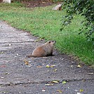 Groundhog by hutzelbein in Tips  and Tricks