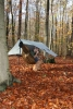 Hammockin' In The Homely Woods In Fall Colors