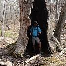 big ol tree hole