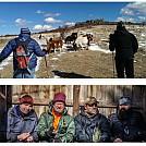 Mt. Rogers ponies