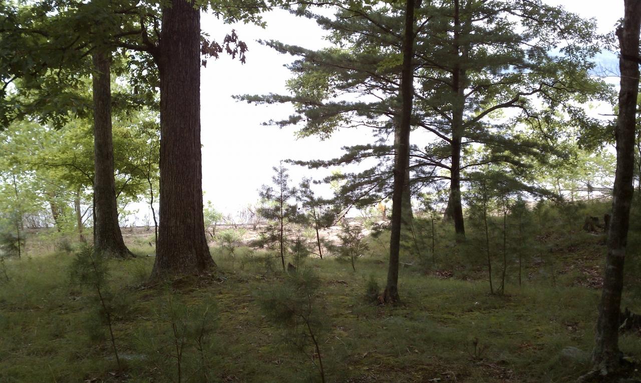 Campsite View, Lake Monroe