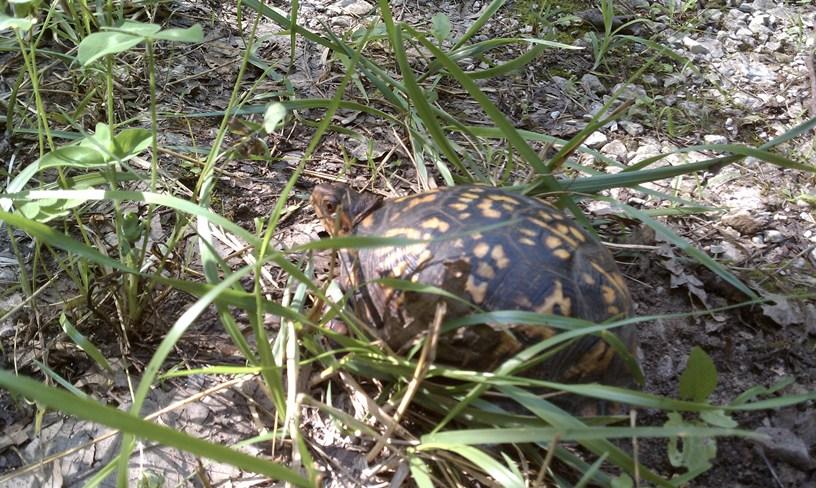 Turtle-turtle