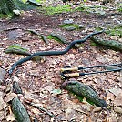 rat snake wildcat shelter