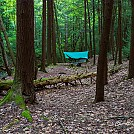 Moose creek hang by Wildchild 1 in Hammock Landscapes