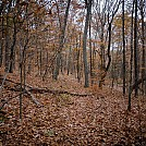 Where's the Trail by Ozarks Walkabout in Hammock Landscapes