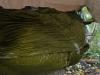 Survival Tube Cocoon by Birdofprey in Homemade gear