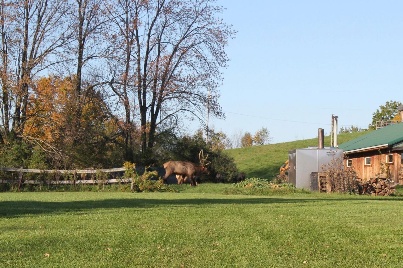 Elk Trail, Elk County Pa