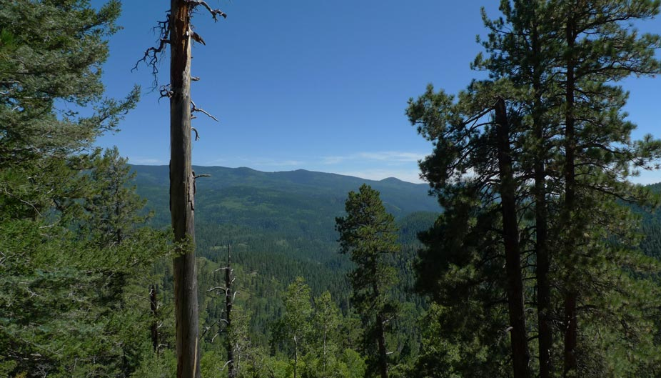 Pecos Wilderness NM