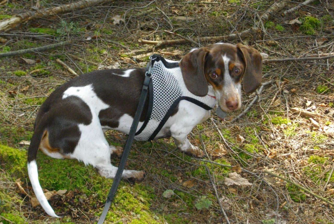 Trail Buddy Wilber