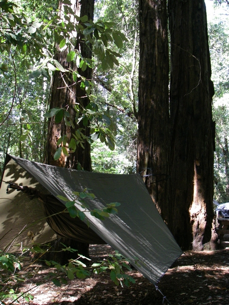 Camping In The Redwoods