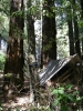 Camping In The Redwoods by Greg Dunlap in Hammocks