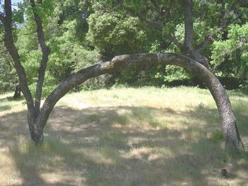 One Tree Hammock Hang