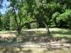 One Tree Hammock Hang by Greg Dunlap in Hammocks