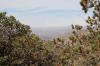 Boar 057 by mega82 in Hammock Landscapes