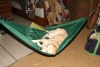 Diy Dog Hammock